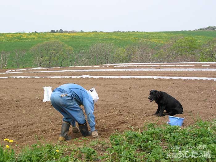 農作業をそばで見ているのんた君