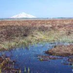 水をたっぷり含んだサロベツ湿原(2011年5月12日)