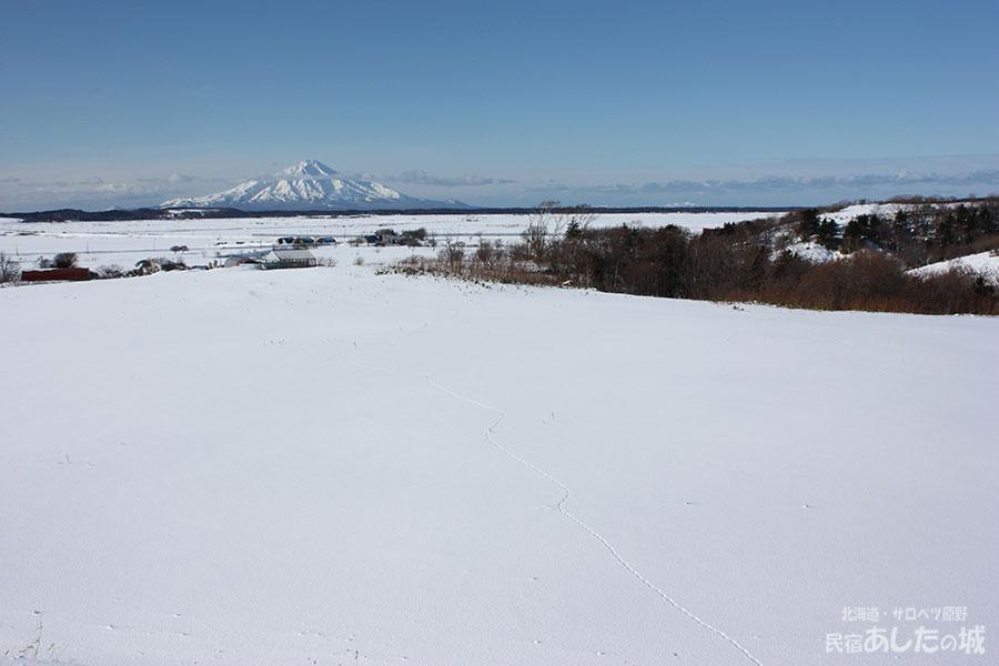 冬の利尻と狐の足跡(2010年1月9日)