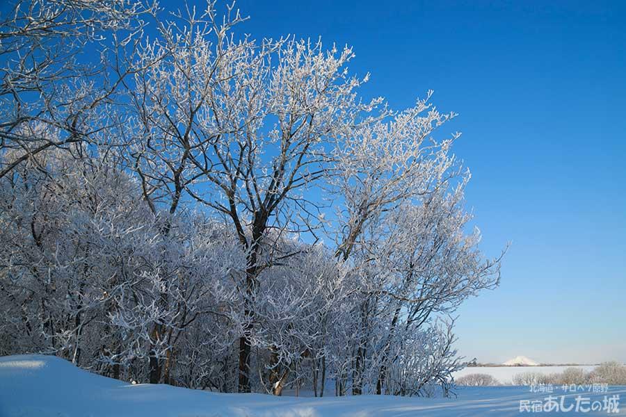 樹氷と利尻