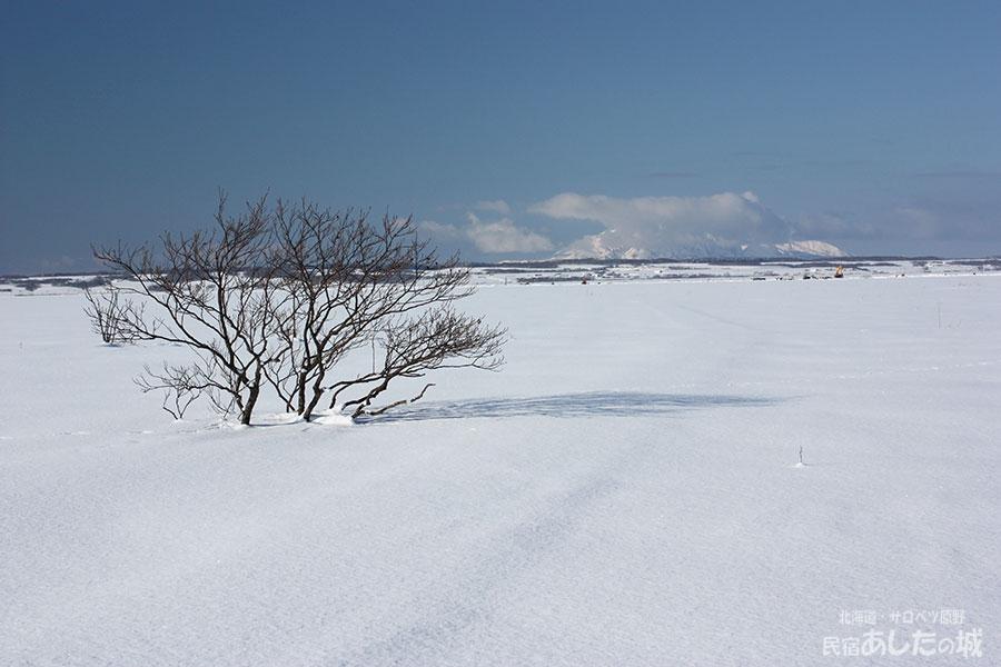 雪の下になったサロベツ湿原センター遊歩道(2012年1月19日)