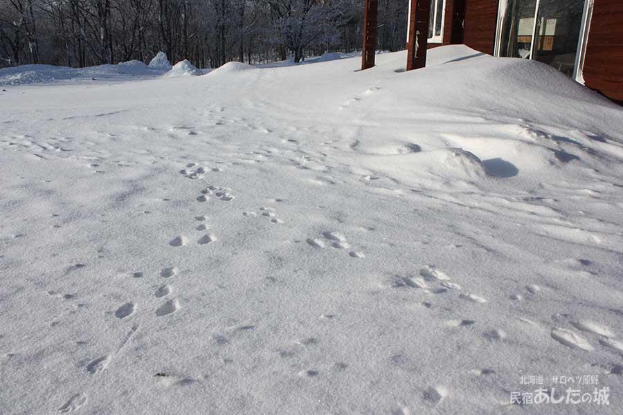 ベランダ前のウサギの足跡