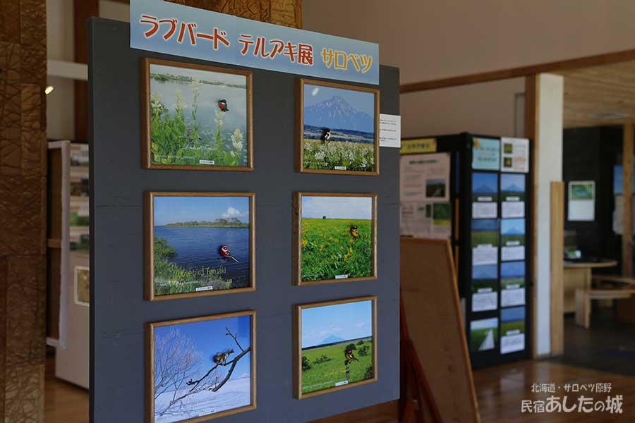 サロベツ湿原センターの催し物