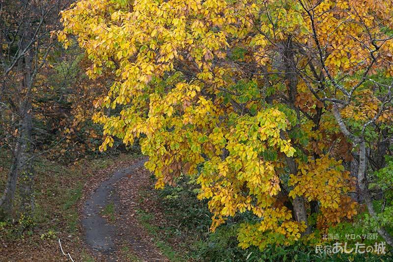 私道と黄葉した葉っぱ