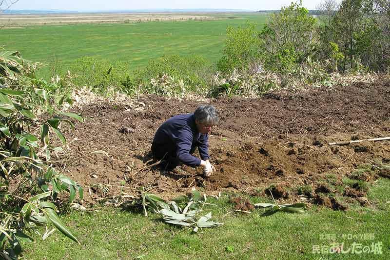 掘った笹の跡
