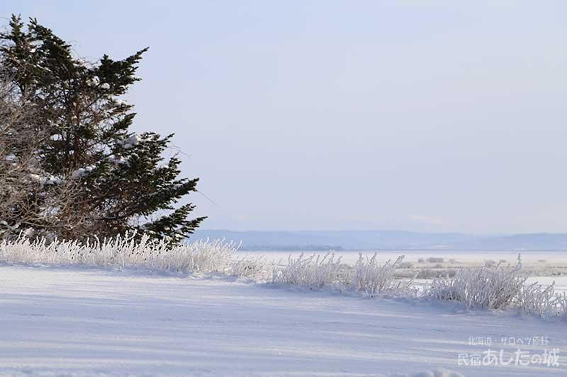 キャットミントについた樹氷