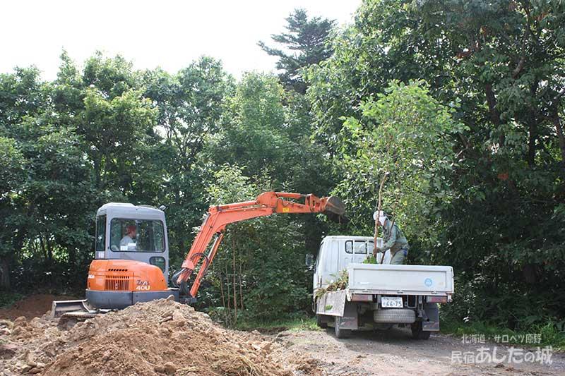 移植する木