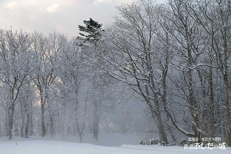 風で残りの雪が落ちていく
