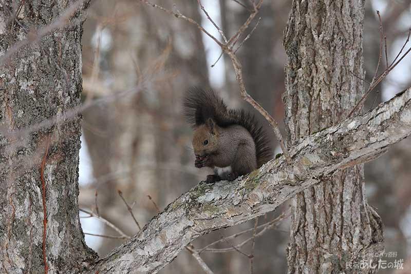 食事は樹上で