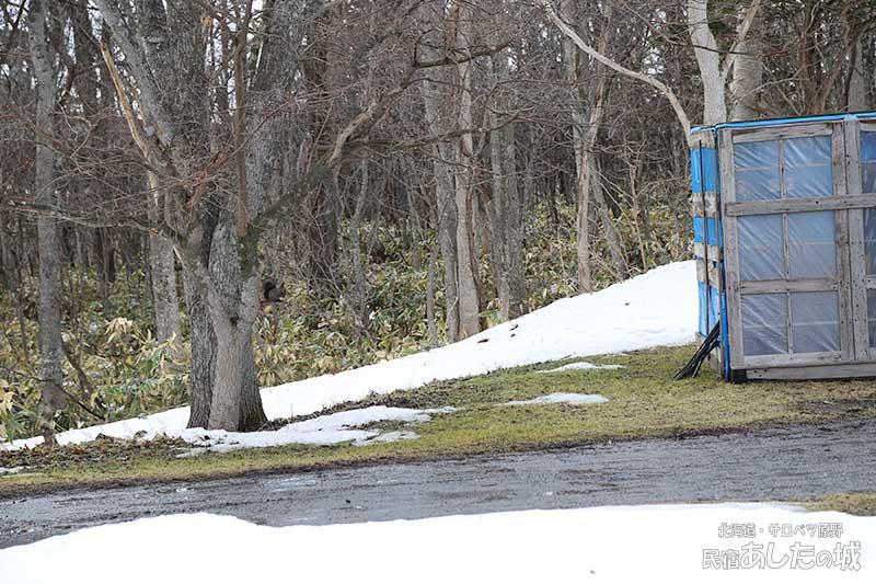 除雪機小屋そばの木にいるエゾリス