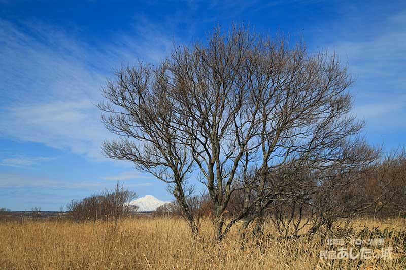 サロベツ湿原と利尻富士