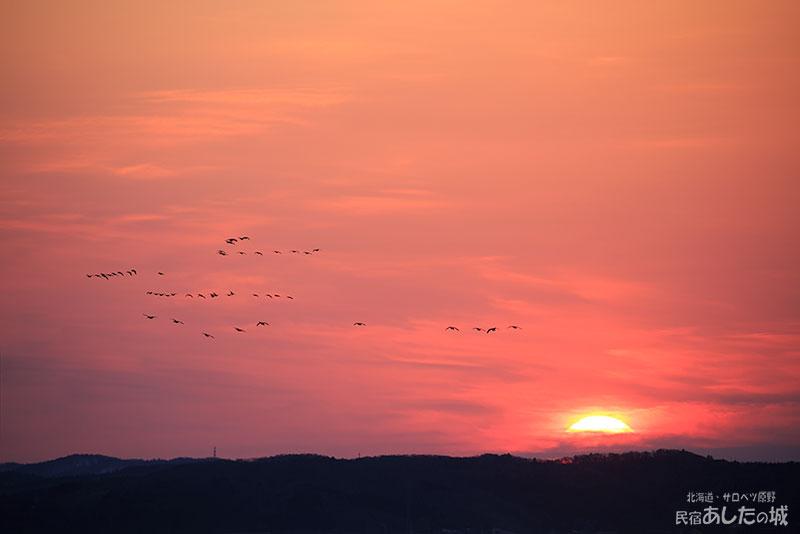ヒシクイの群れと夜明け