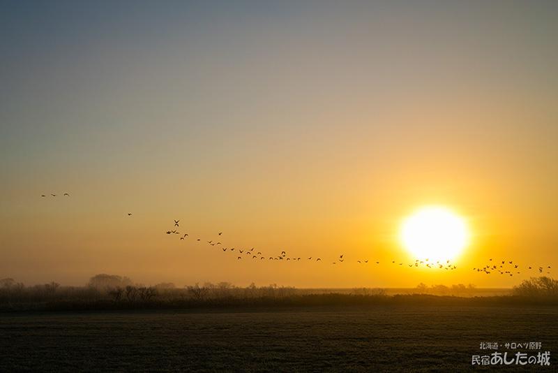 マガンの群れとサロベツの夜明け