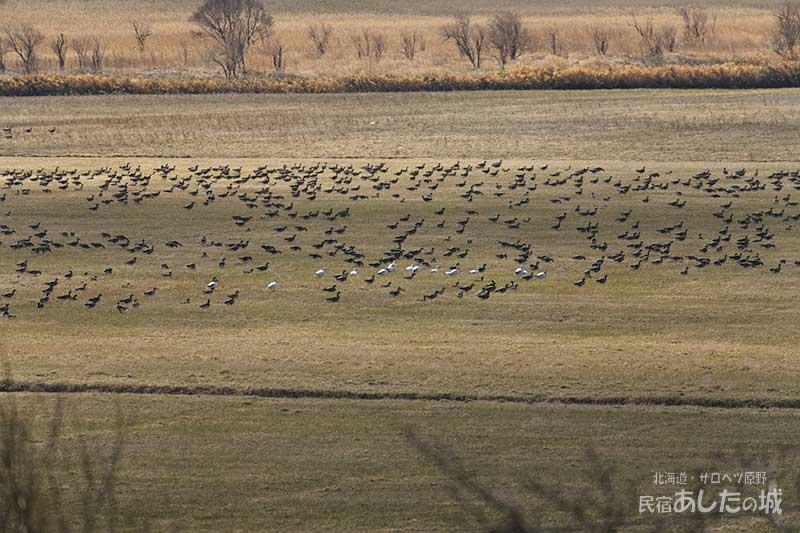 宿の広間から見る牧草地に