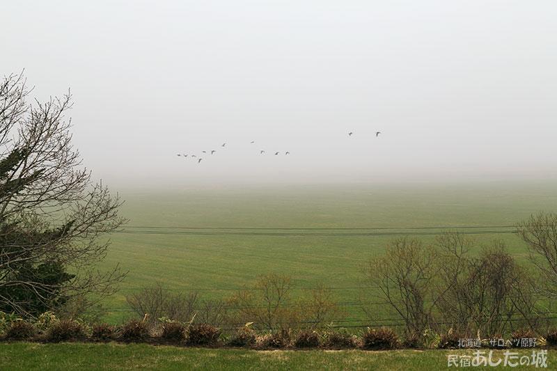 霧の中を飛ぶマガン