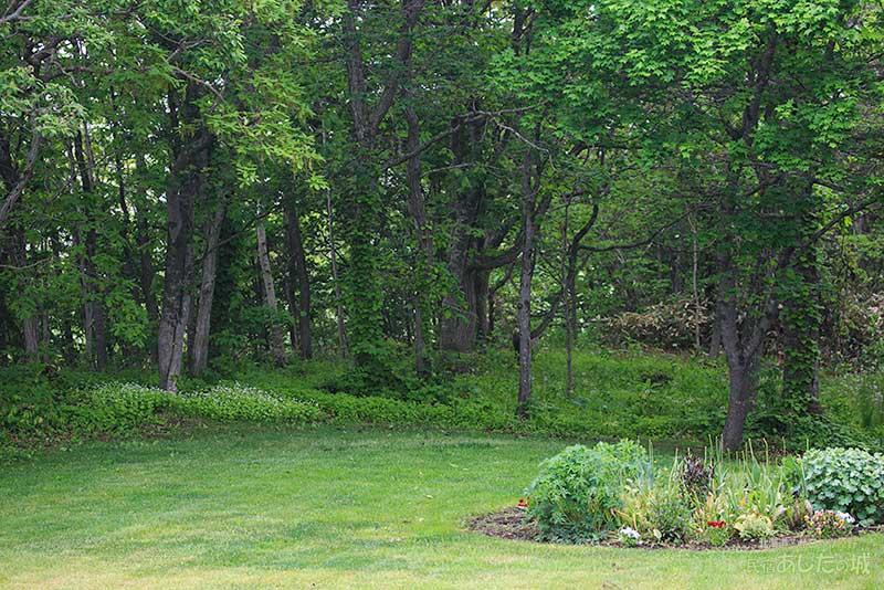 葉が茂った林と花壇