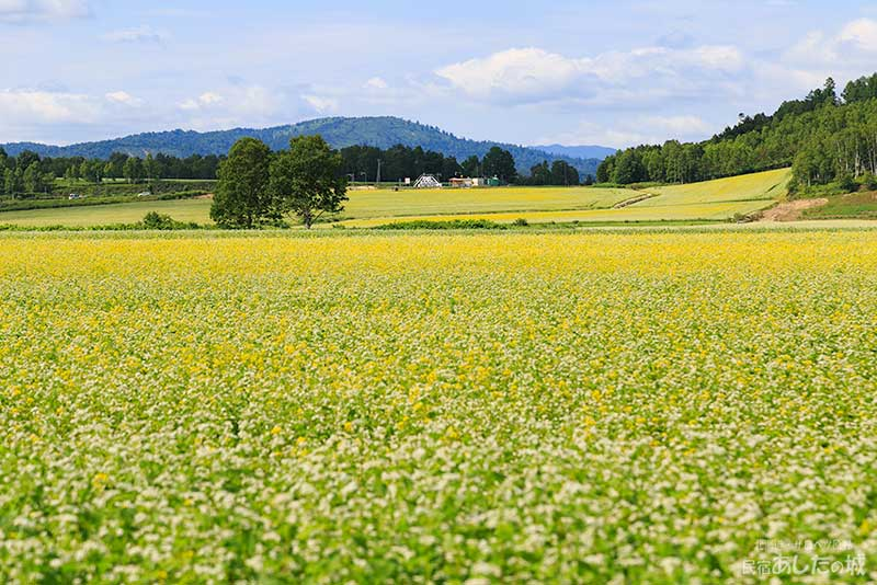 農道から政和地区そばの花展望台を見る