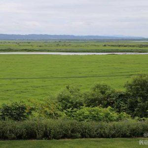目の前の牧草地が冠水