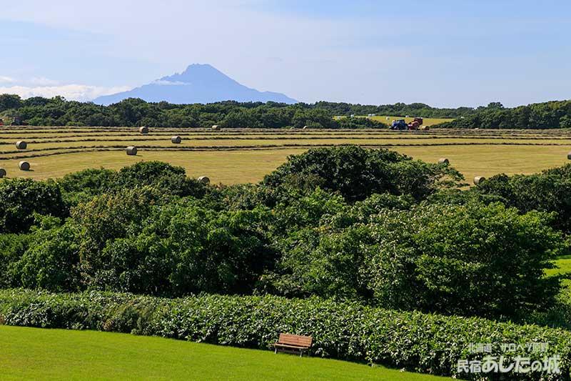 裏の丘に牧草ロール