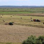 広間から見える牧草地