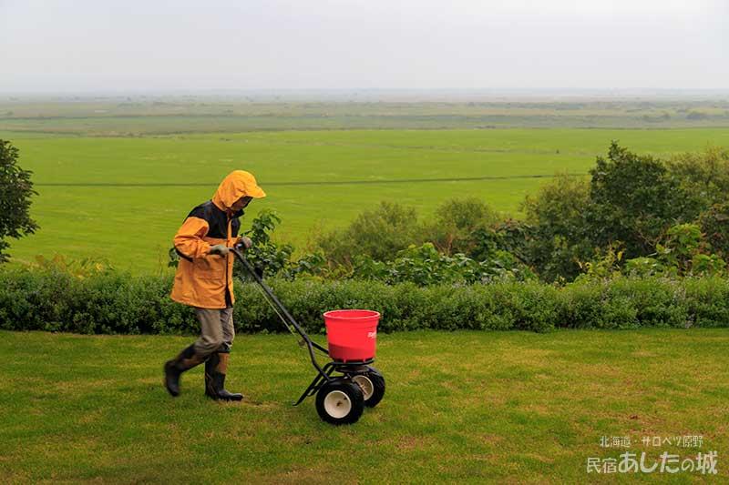 芝生に肥料やり