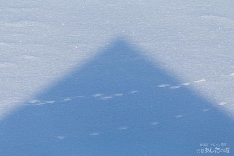 屋根の影と動物の足跡
