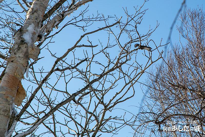 隣の枝へジャンプ
