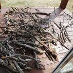 落ちていた枝を乾かす