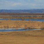 氾濫したサロベツ川と野鳥