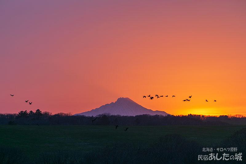 夕焼け空とマガンの群れ(21年4月29日)