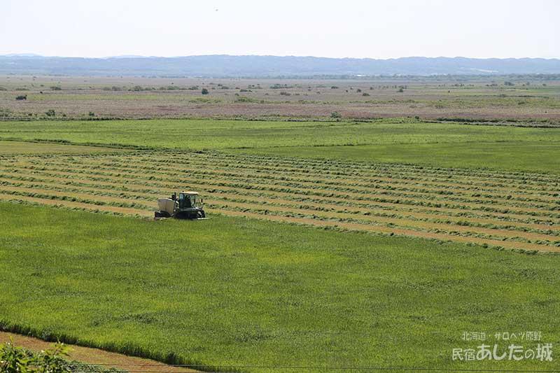 居間から見える牧草地