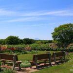 裏庭のベンチ
