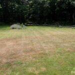 ベランダから見た芝生