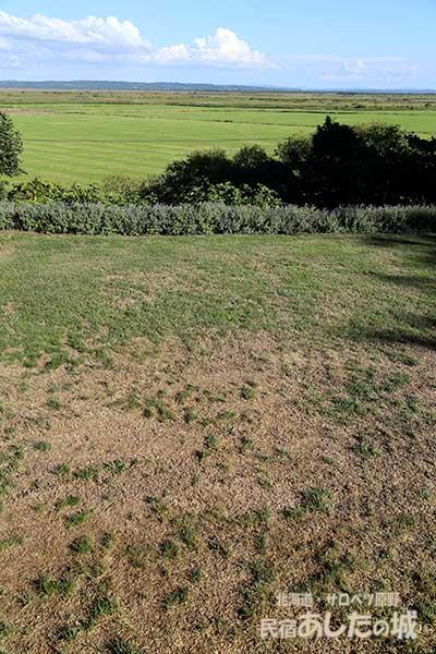 ベランダ前の悲惨な芝生