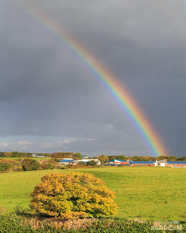 Yさんの牛舎から虹ビームだ